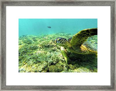 Sea Turtle #2 Framed Print