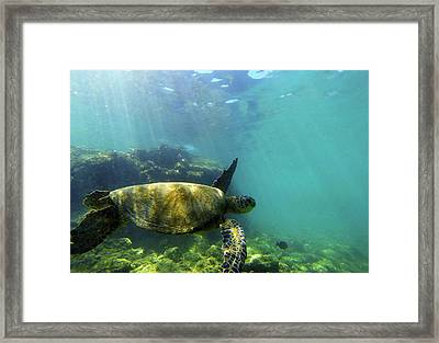 Framed Print featuring the photograph Sea Turtle #5 by Anthony Jones