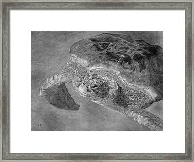 Sea Turtle At Grand Cayman Framed Print by Christina Steward