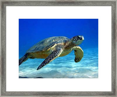 Sea Turtle Blue Framed Print by Peter Oconor