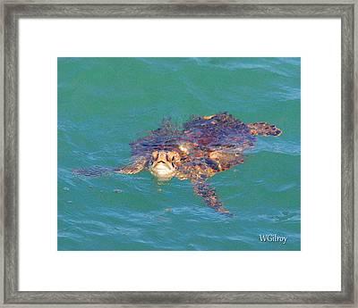 Sea Turtle / Cocoa Beach Framed Print