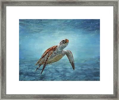 Sea Turtle Framed Print by David Stribbling