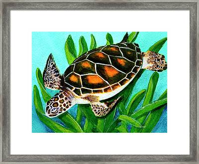 Sea Turtle Honu #352 Framed Print by Donald k Hall