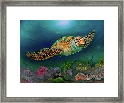 Sea Turtle II Framed Print