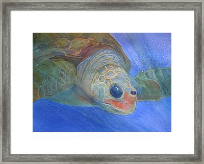 Sea Turtle IIi Framed Print by Dee Durbin