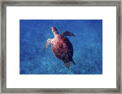 Framed Print featuring the photograph Sea Turtle by Lars Lentz