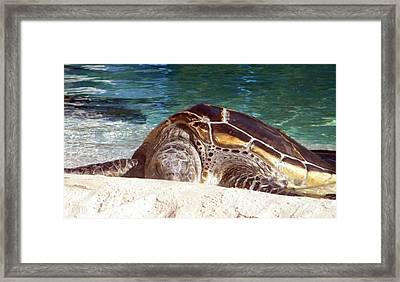 Framed Print featuring the photograph Sea Turtle Resting by Amanda Eberly-Kudamik