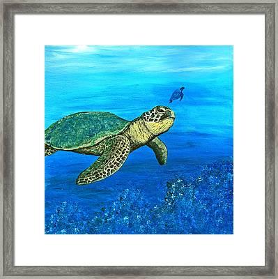 Sea Turtle Framed Print by Sabrina Zbasnik
