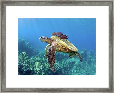 Sea Turtle Underwater Framed Print by M.M. Sweet