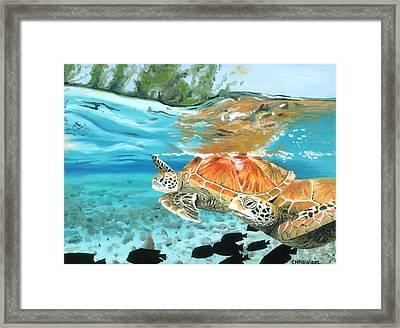 Sea Turtles Framed Print by Chris Wiese