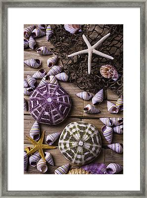 Sea Urchins With Starfish Framed Print