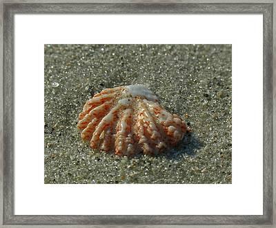Sea Valentine Framed Print by Juergen Roth