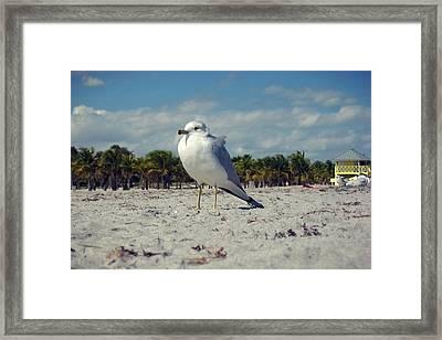Seabird Framed Print by JAMART Photography