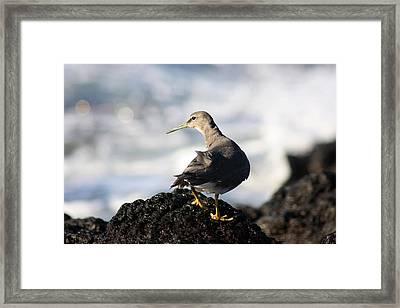 Seabird Framed Print by Mary Haber