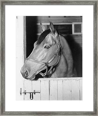 Seabiscuit 1933-1947, In His Stall Framed Print