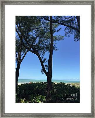 Seagrapes And Pines Framed Print by Megan Cohen
