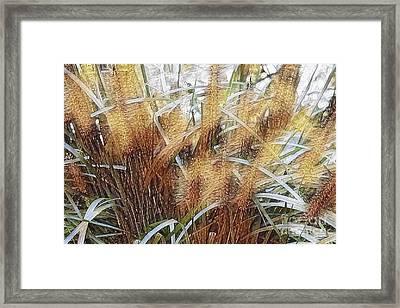 Seagrass Framed Print by Judy Palkimas