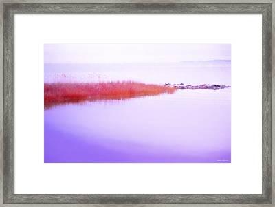 Seagrass Sandbar Framed Print