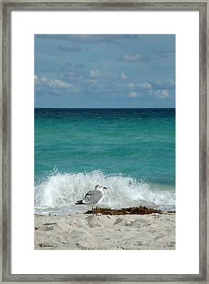 Seagull - South Beach Miami Framed Print