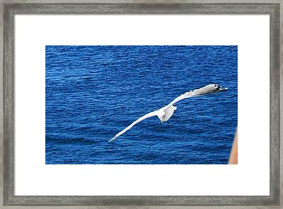 Framed Print featuring the photograph Seagull 1 by John Hartman