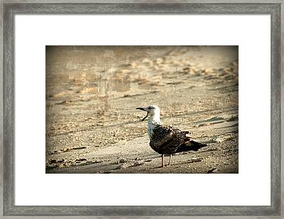 Seagull 2 - Jersey Shore Framed Print by Angie Tirado