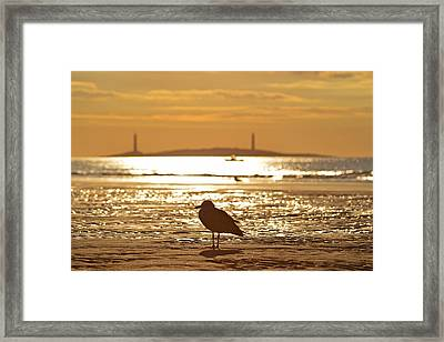 Seagull Admiring Thacher Island Gloucester Ma Good Harbor Beach Framed Print