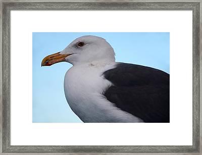 Seagull Framed Print by Aidan Moran