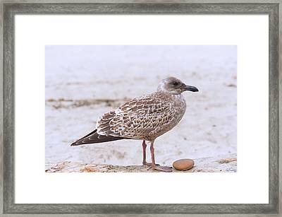 Seagull And His Rock Framed Print