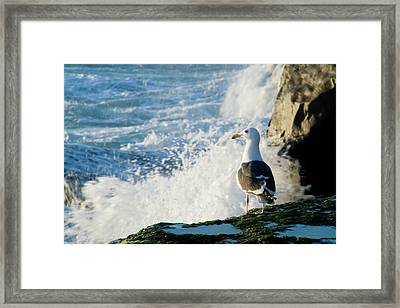 Seagull And The Sea Framed Print
