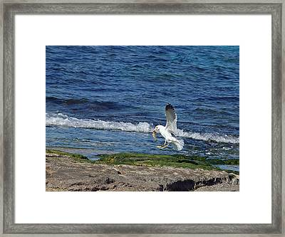 Seagull Framed Print by Arik Baltinester