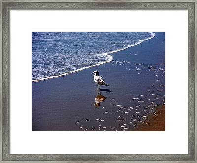 Framed Print featuring the photograph Seagull At Myrtle Beach  by Beth Akerman