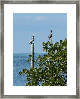 Seagull Framed Print by Audrey Venute
