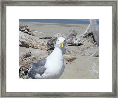 Seagull Bird Art Prints Coastal Beach Driftwood Framed Print by Baslee Troutman