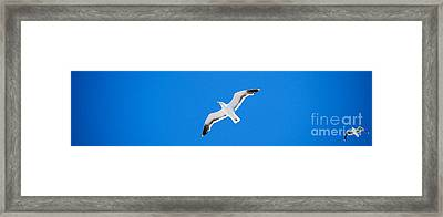 Seagull Blue Framed Print
