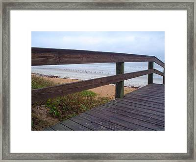 Seagull Board Meeting Framed Print