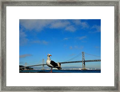 Seagull By The Bay Bridge San Francisco Framed Print by Andrew Dinh