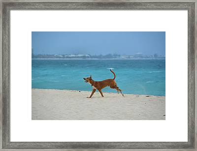 Seagull Chase Framed Print by JAMART Photography