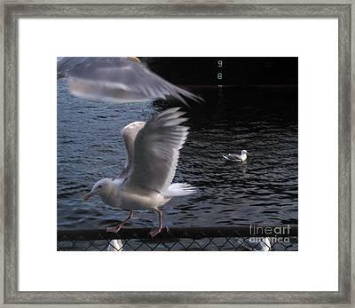 Seagull Circus Framed Print