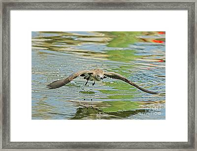 Seagull Fishing Framed Print