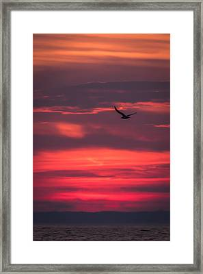 Seagull Flying At Sunset Jersey Shore Framed Print by Terry DeLuco