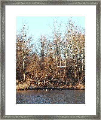 Seagull Flying Framed Print