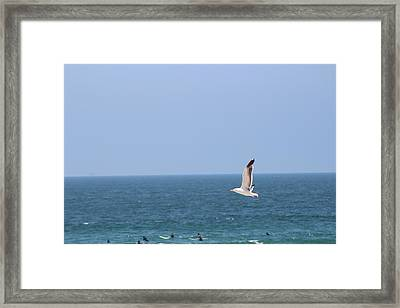 Seagull Flying Over Huntington Beach Framed Print