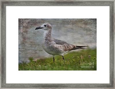 Seagull Friend Framed Print by Deborah Benoit