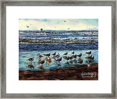 Seagull Get-together Framed Print