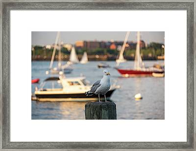 Seagull Guarding The Boston Harbor Boston Ma Framed Print by Toby McGuire