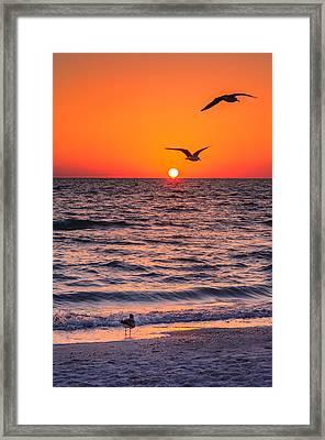 Seagull Hat-trick Framed Print