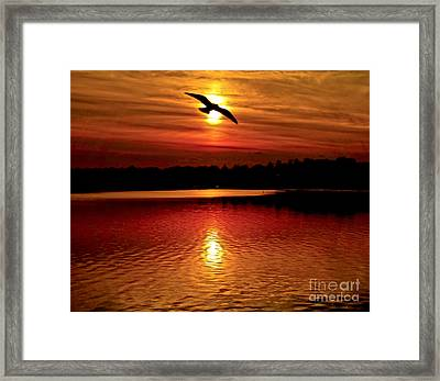 Seagull Homeward Bound Framed Print by Carol F Austin