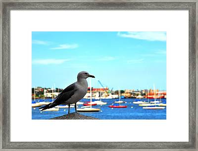 Seagull In Boston Harbor Framed Print by Andrew Dinh