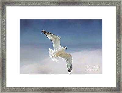 Seagull In Flight Framed Print by Bonnie Barry