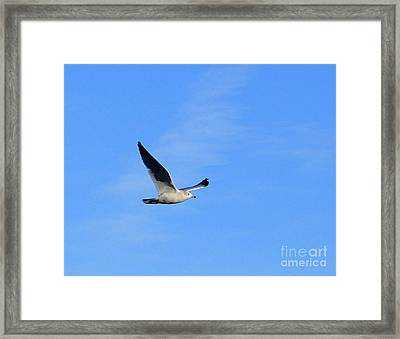 Seagull In Flight Framed Print